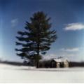 big_pine_little_shed-977ec2ea8d504beaab0670a22921fbdf8518c2a7